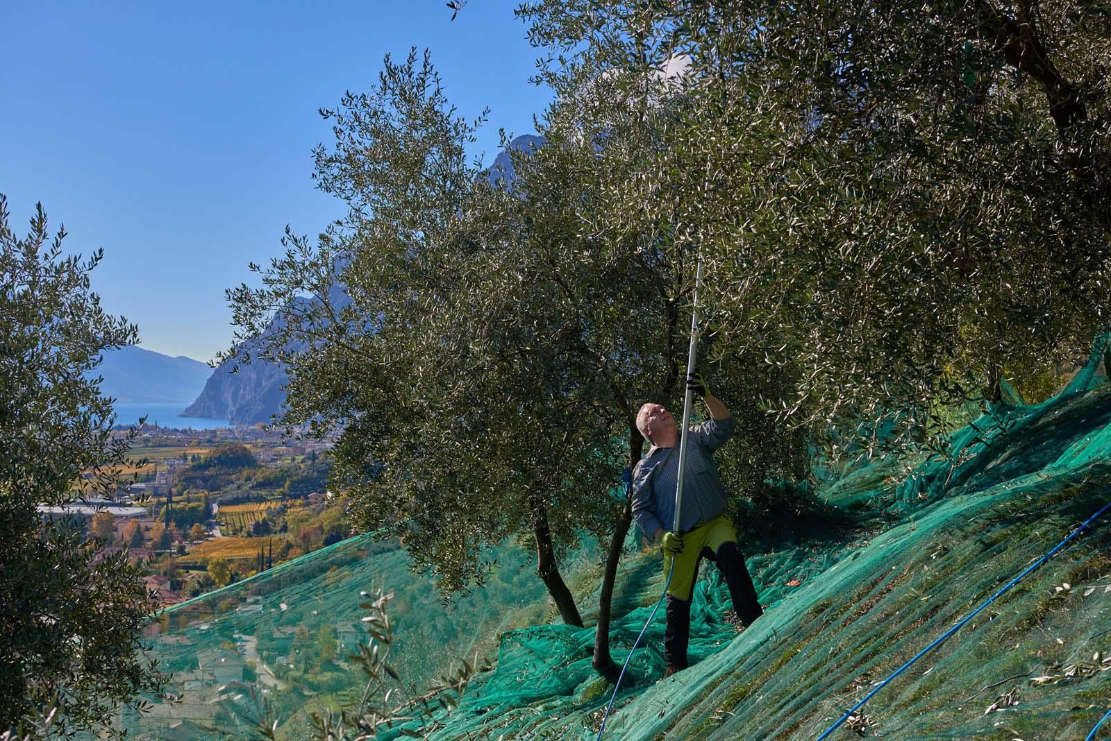 Azienda Agricola Tenuta Maso Botes Lago di Garda Trentino